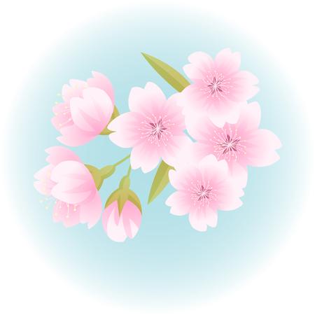 Spring pink sakura cherry blossom flower illustration vector