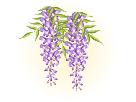 violet lavender wisteria flower spring background illustration vector Ilustração