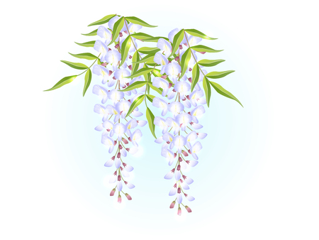 White wisteria flower spring background illustration vector
