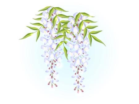 White wisteria flower spring background illustration vector