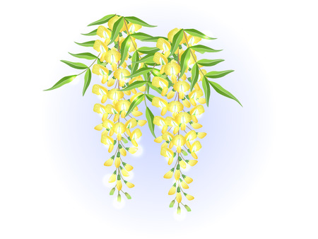 Yellow wisteria flower spring background illustration vector  イラスト・ベクター素材