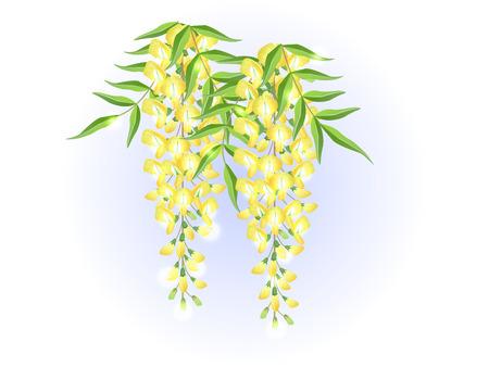 Yellow wisteria flower spring background illustration vector Illustration