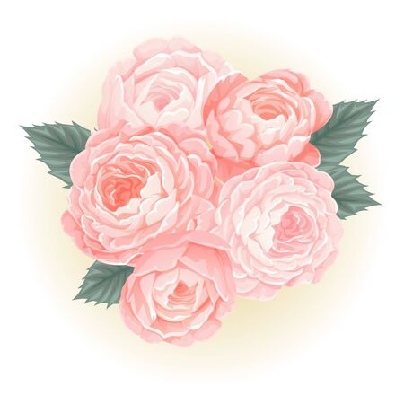 pink roses bouquet flower illustration vector