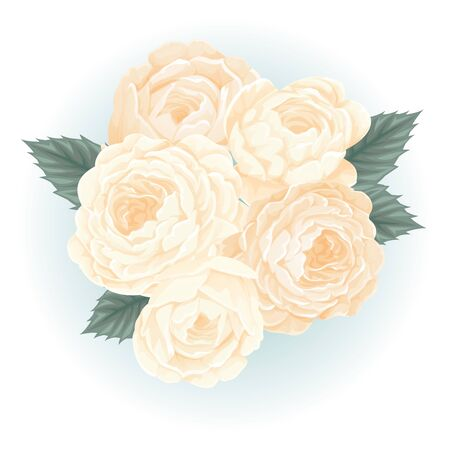 white roses bouquet flower illustration vector