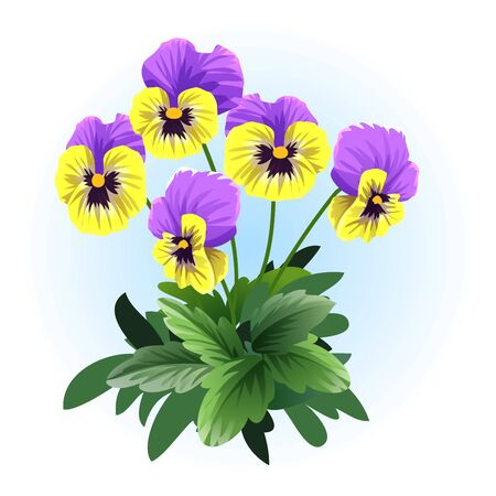 yellow violet pansy viola illustration vector  イラスト・ベクター素材
