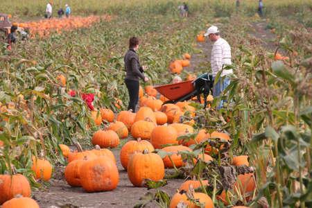 Pumpkin festival Sajtókép