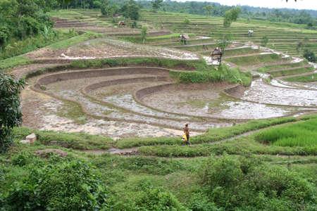 インドネシアの田園地帯 写真素材