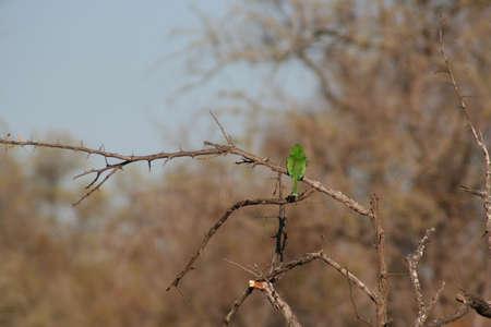 south african birds: South African birds Stock Photo