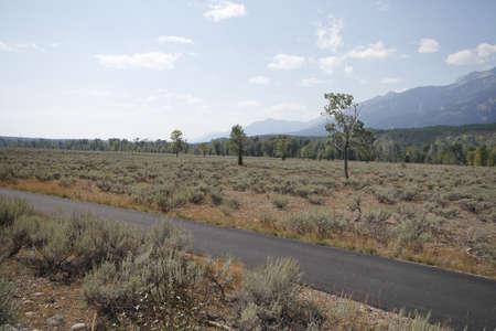 scrub grass: Yellowstone Grand Tetons