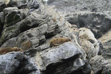 Isla Damas near La Serena Chile