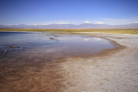 laguna: Laguna Cejar, Atacama, Chile Stock Photo