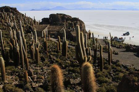 parque: Parque Incahuasi, Salar De Uyuni Bolivia Editorial
