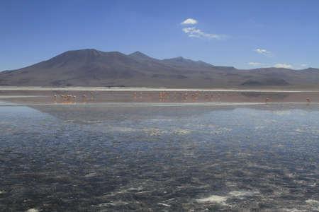 eduardo: Flamencos in Eduardo Alveroa, Uyuni Bolivia