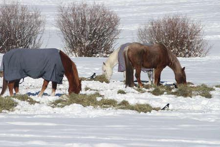 horses in field photo