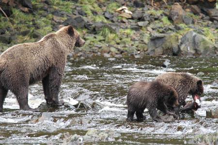bear lake: Bear viewing in Pavlov lake and pack creek, alaska