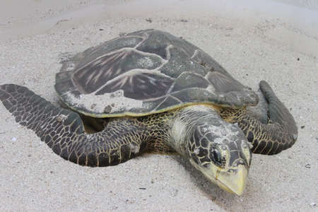 warm water: beaches at the andamans, white sand and warm water; giant turtles;