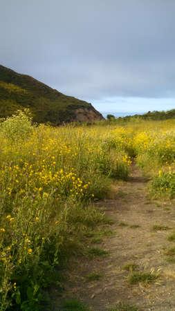 ポイント レイズ カリフォルニア自然観 写真素材