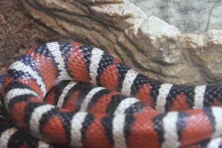 wildlife preserve: View of Snakes at bend wildlife preserve, bend, oregon