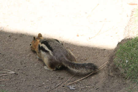 wildlife preserve: View of chipmunks at bend wildlife preserve, bend, oregon