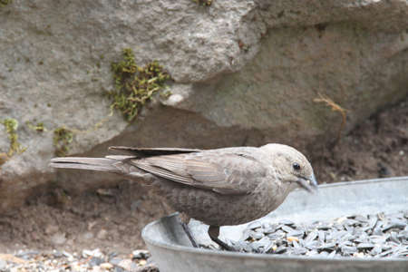 klamath: View of birds at klamath falls