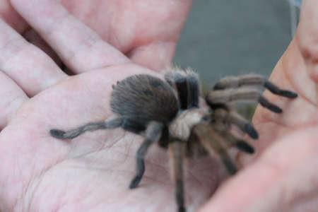View of tarantulas in wild