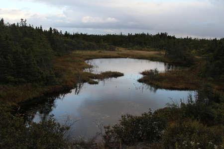 newfoundland: view of Nature in NewFoundLand, canada