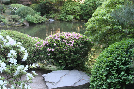 ponte giapponese: View of Japanese gardens in Portland