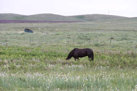 Glacier National Park, Browning, Montana, USA Stock Photo