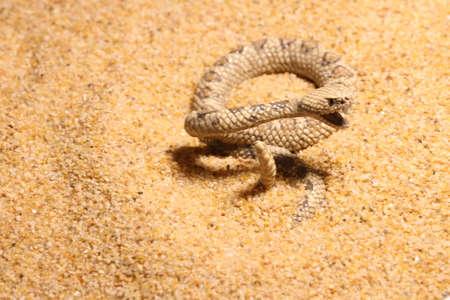Close up macro shot of a snake Stock Photo - 110977845