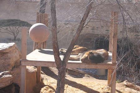 1/10/2019: Albuquerque, New Mexico: Zoo in Albuquerque New Mexico Standard-Bild - 115279312