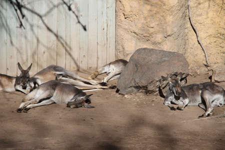 1102019: Albuquerque, New Mexico: Zoo in Albuquerque New Mexico Imagens