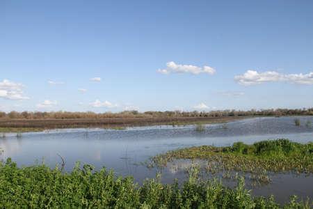 Bird Migration season in San Joaquin Wildlife Preserve California