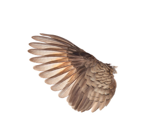 wings of birds on white bacground