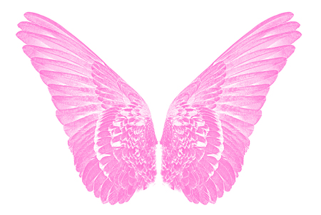 pink wings of birds  on white  bacground