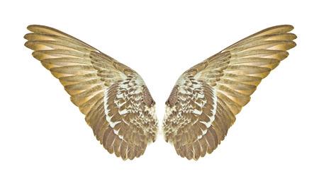 wings of bird on white bacground Stock Photo