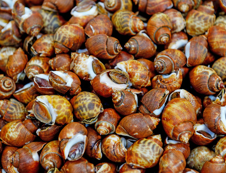 pila: Fresh Apple snail with ice in local market in Thailand