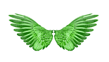green wings of birds on white bacground