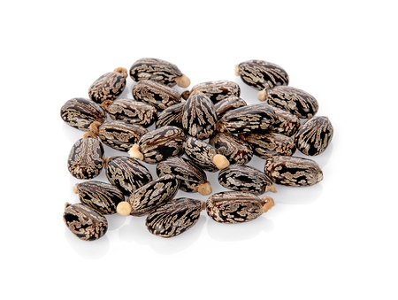 Castor oil seeds (Ricinus Communis) isolated on white background