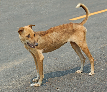 Vagrant dog in Thailand being sick Stock Photo