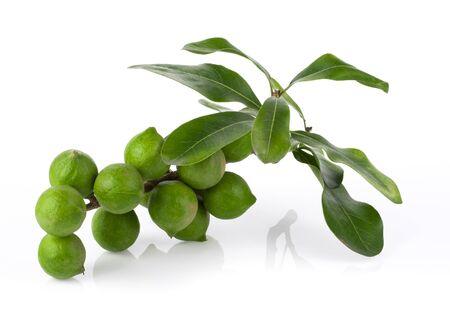 macadamia nut on a white background