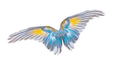 wings of birds on white background Zdjęcie Seryjne