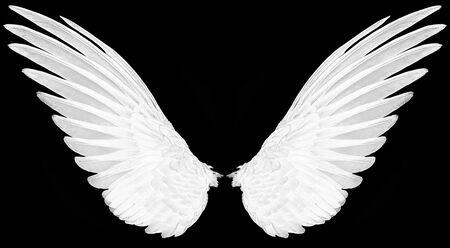 alas de pájaros en el fondo de la espalda