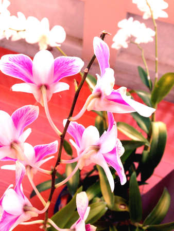bright: Bright colors orchids Stock Photo