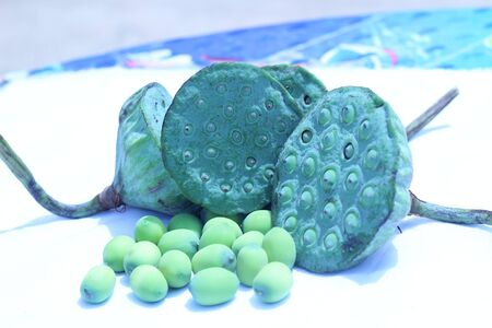 lotus seeds: Lotus seeds green on a white background.