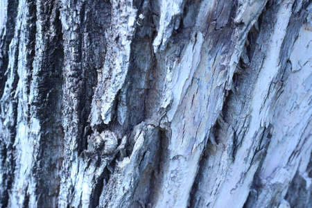 old wood texture: Old wood texture of tree bark. Vector illustration