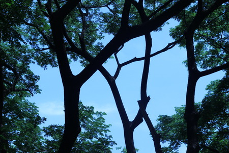 ascetic: Under the big tree branches are strong and beautiful