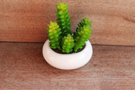 planted: A small ornamental plant in a white pot is placed on a brown table
