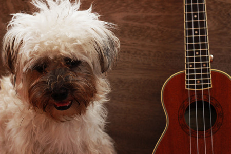 coro: Small brown dog sits between roses and ukulele