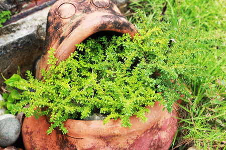 planted: Small shrub plants in frog pottery in the park