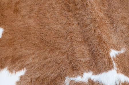 Cow hair Stock Photo